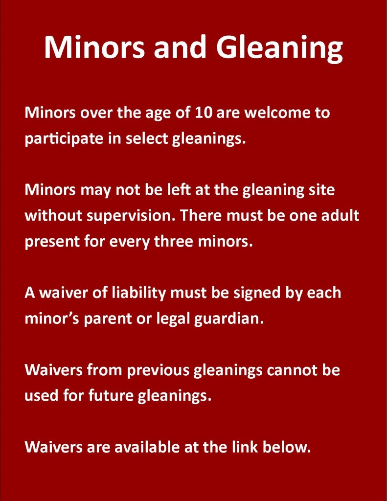 Minors and gleaning